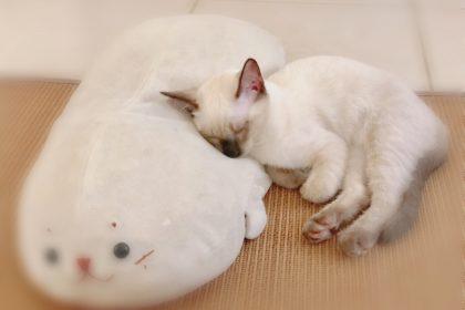 おやすみメイちゃん